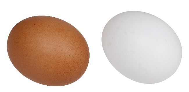Brown Eggs vs White Eggs - Difference Between Brown And White Eggs