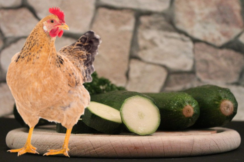 Can Chickens Eat Zucchini