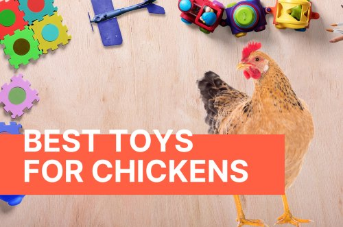 toys for hens and chicks