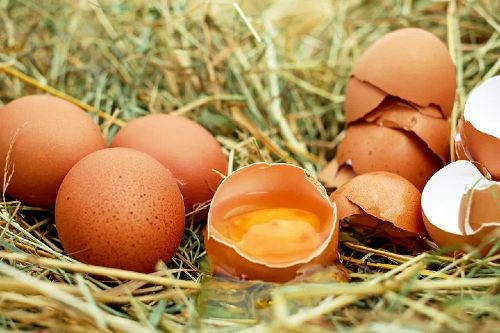 how to stop chickens eating eggs