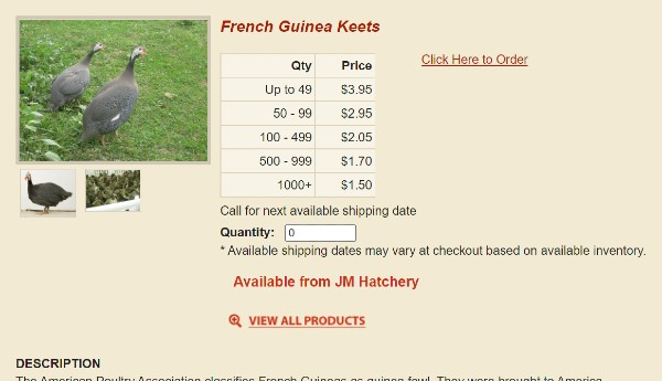 guinea fowl keets for sale